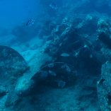 Orohena wreck_leica underwater photography_quality